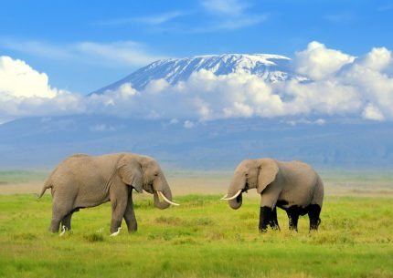 2 days Amboseli National Park