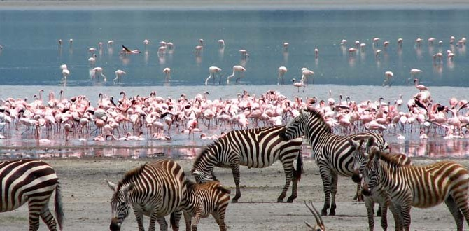 6 days masai mara lake nakuru aberdares with terminal tours kenya