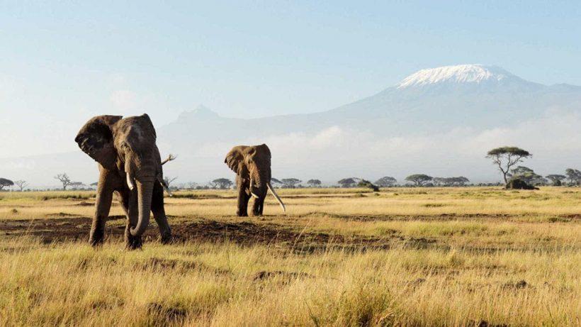 Serengeti Elephants