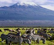 6 days masai mara lake nakuru amboseli with terminal tours kenya