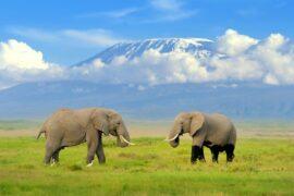 2 days Amboseli National Park