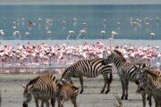6 days masai mara lake nakuru aberdares with terminal tours kenya