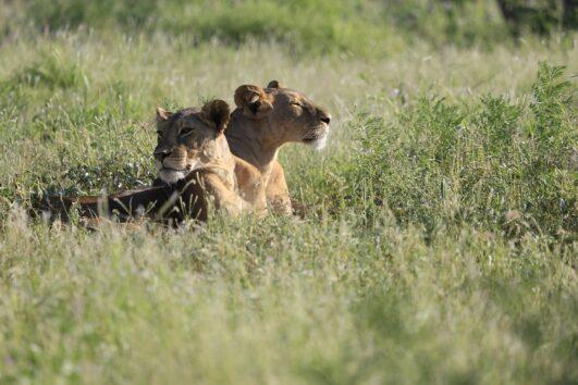 3 days Meru National Park