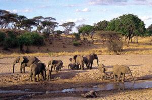 2 days Tsavo East National Park