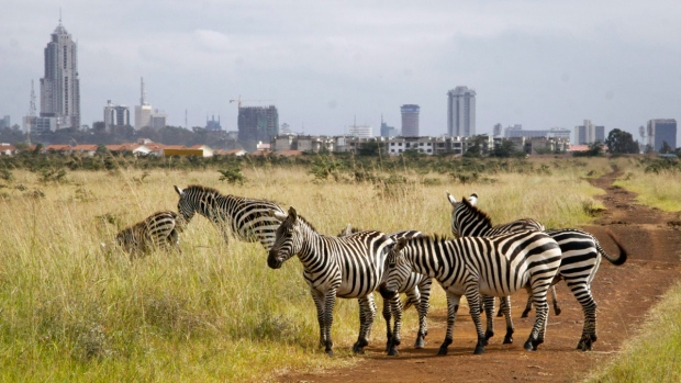 Zebras in Nairobi National Park