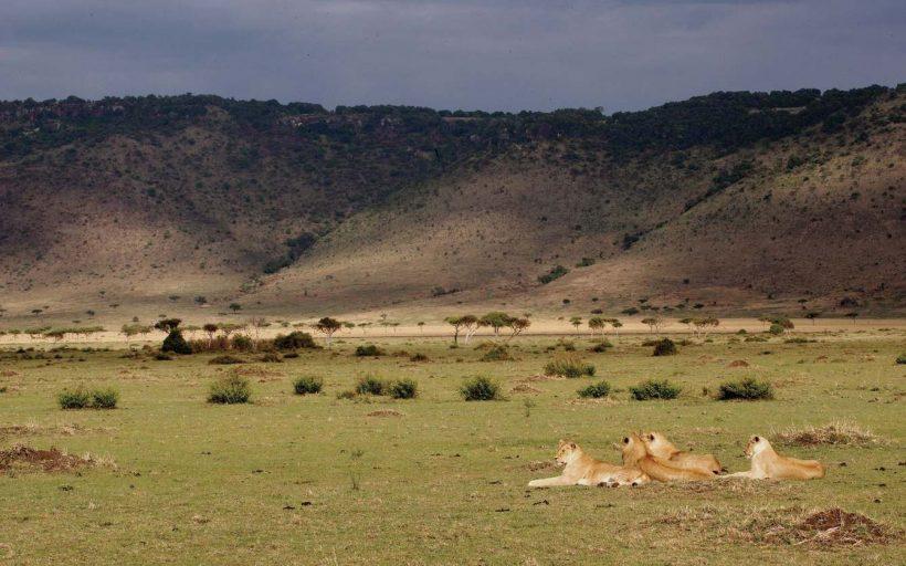 masai-mara-spotted-land