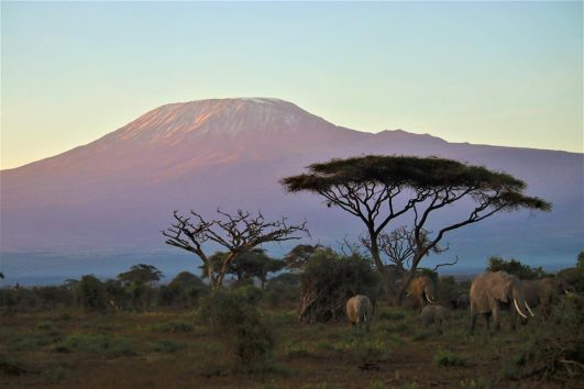 Combined Safaris