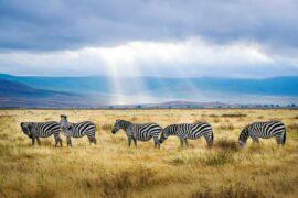 Nakuru Masai Mara Serengeti Ngorongoro Amboseli