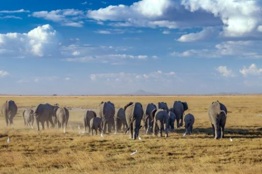 Amboseli , Tsavo